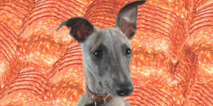 Can Dogs Eat Pepperoni? A Guide for Whippet Owners