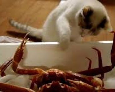 Can Cats Eat Crab Meat?   TheTvBuzz