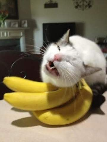 Can Cats Eat Bananas? - FreakyPet