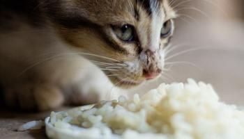 ▷ ¿Los gatos pueden comer pan? - Experto Gatuno