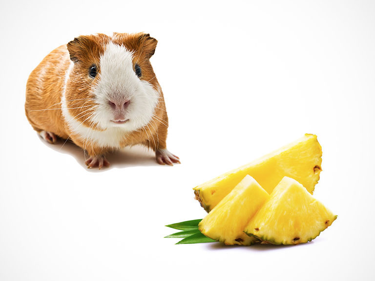 Can Guinea Pigs Eat Pineapple, Skin, Leaves, Tops?