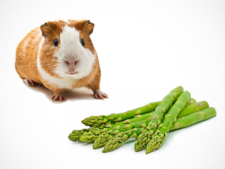 Can Guinea Pigs Eat Asparagus? - Serving Size With Side Effects