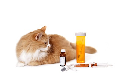 How Much Penicillin to Give a Cat? The Right Dosage You Need to Know
