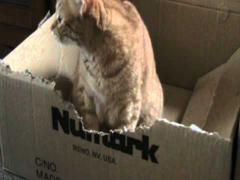 Cat chewing up cardboard box - YouTube