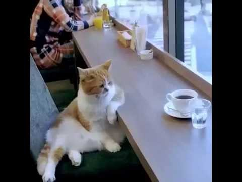 Cat drink coffee - YouTube