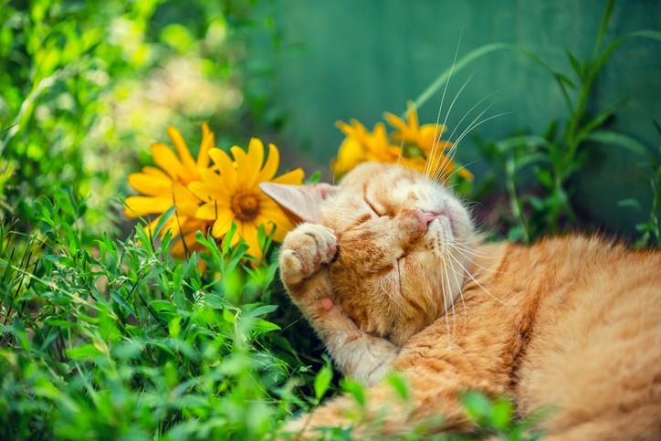 10 Pet-Friendly Flowers and Plants That Are Safe Around Cats and ...