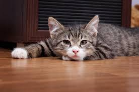 Why Is My Cat Throwing Up Clear Liquid – PerroMart SG