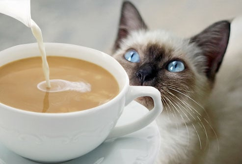 Harmful Foods Your Cat Should Never Eat: Tuna, Milk, Raw Fish, and ...