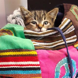 Kedili Blog: KEDİ NEZLESİ - KEDİ GRİBİ