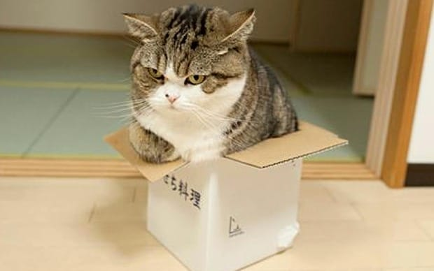Why Does My Cat Chew On Cardboard? – CattyBox