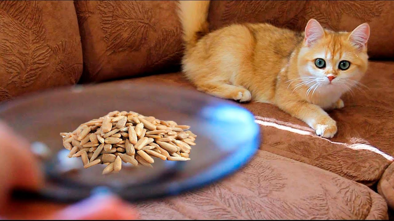 Will cats and kittens eat sunflower seeds?