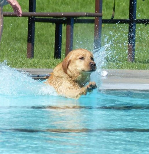Mayfair Pool in Saskatoon open to dogs today | CBC News
