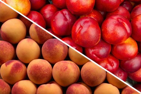 Can Rabbits Eat Peaches: Is It Safe For Them?