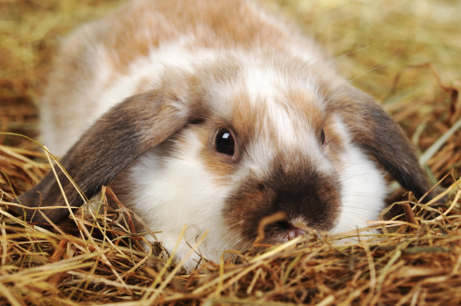 The Best Rabbit Hay to Keep Your Rabbit Healthy and Thriving | Rabbit Hole Hay