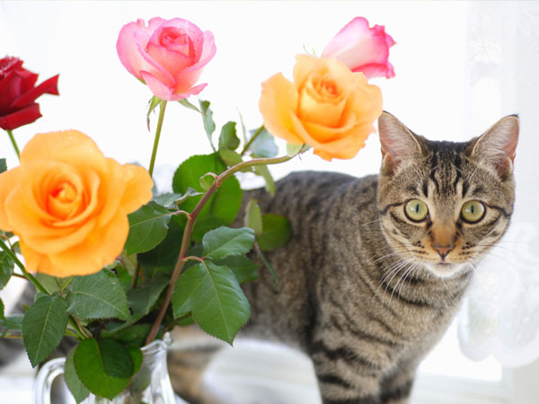 Are Roses Poisonous Plants? Are They Toxic to Pets? - Plant Index