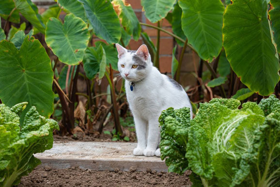 Can Cats Eat Cabbage? Is It Safe for Cats? (The Most Useful Tips) - Best Tips for Pets, Baby, Kittchen