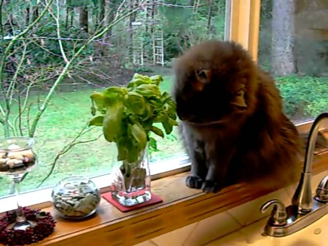 Cat Eating Basil - YouTube