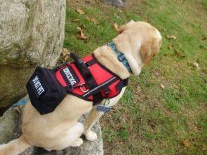 assistance dog jacket Online Shopping -