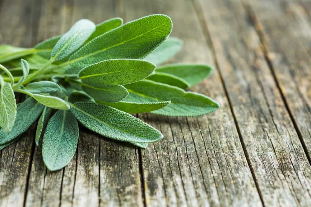 Is Oregano Safe For Cats To Eat?