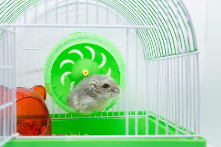 The 50 Best Hamster Cages of 2020 - Pet Life Today
