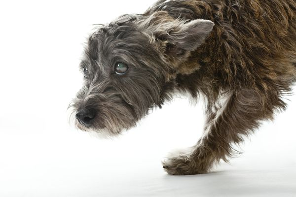 Keppra for Controlling Seizures in Dogs