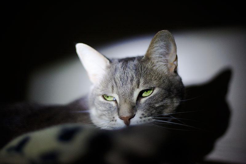 Do Indoor/Outdoor Cats Have Different Sleep Rhythms?