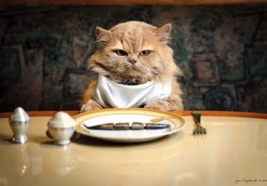 Purchase > cat eats, Up to 63% OFF