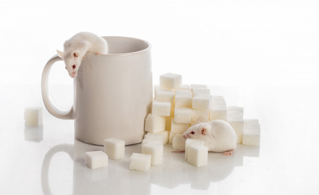 https://www.freepik.com/premium-photo/two-white-mice-crawling-up-stairs-from-sugar-cubes-cup-diabetes-concept_8018045.htm#page=4&query=Mice&position=29