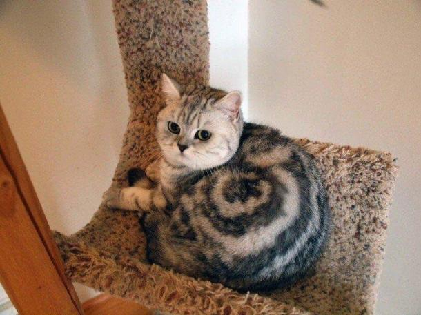 PICTURES: These Cats Have Absolutely Incredible Fur Patterns