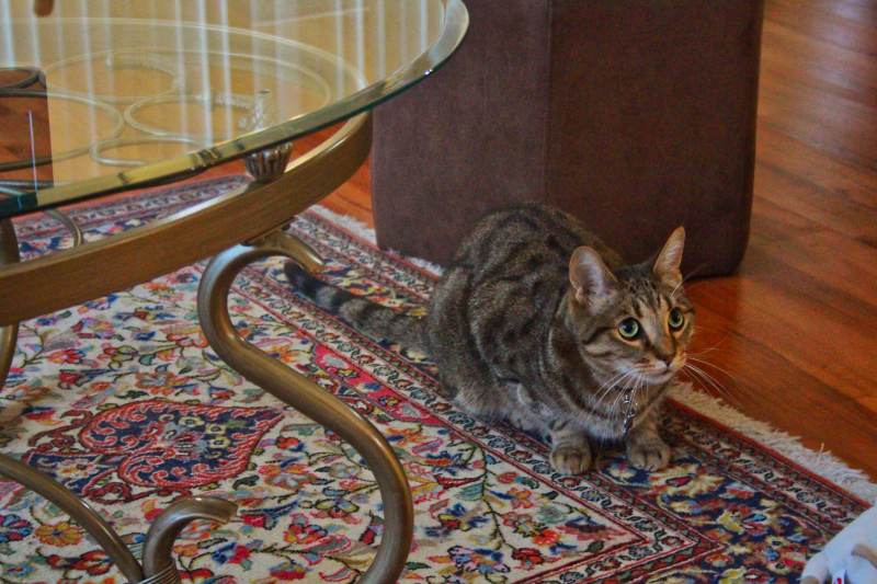 Why Do Cats Run Away from Me? Does My Cat Hate Me? (Advice for ...
