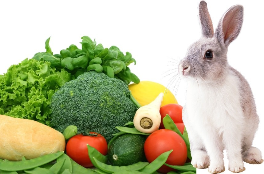 What Vegetables Can Rabbits Eat - What Vegetables Are Bad For Rabbits
