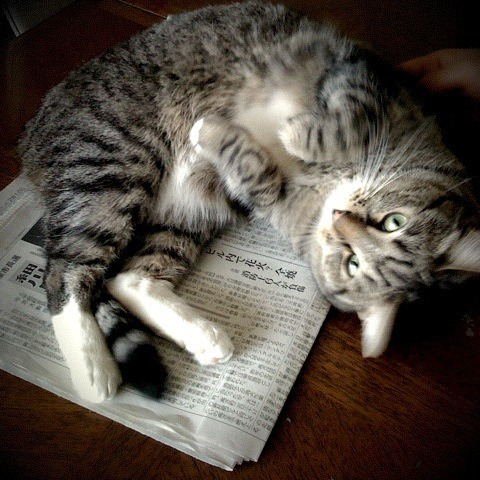 Why Do Cats Lay On Paper? An Intriguing Habit Of Cats