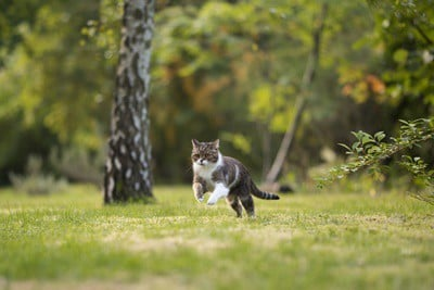 Why Does My Cat Keep Running Away From Me?