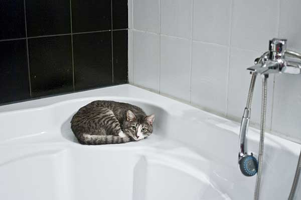 Why Does My Cat Watch Me Shower? (5 Reasons)