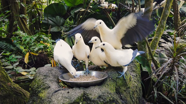 https://www.freepik.com/premium-photo/wild-pigeons-white-blue-color-eat-from-bowl-standing-gray-stone_10597145.htm#page=1&query=pigeon%20eating&position=10