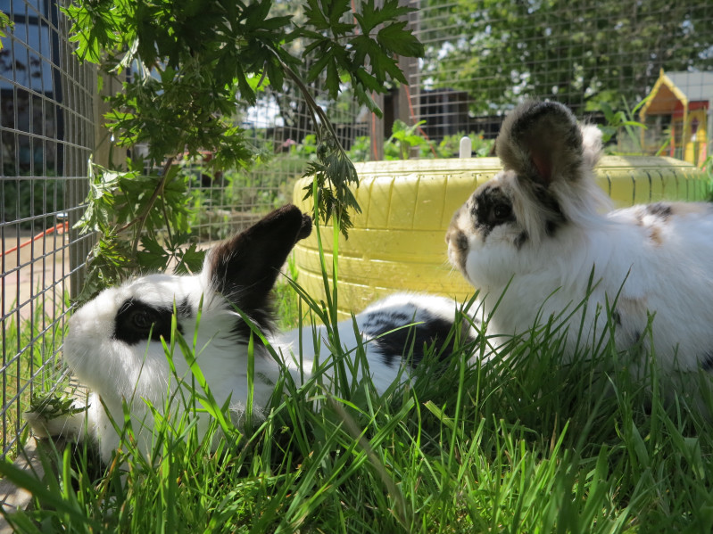 How to trim your rabbits nails   Wood Green - The Animals Charity