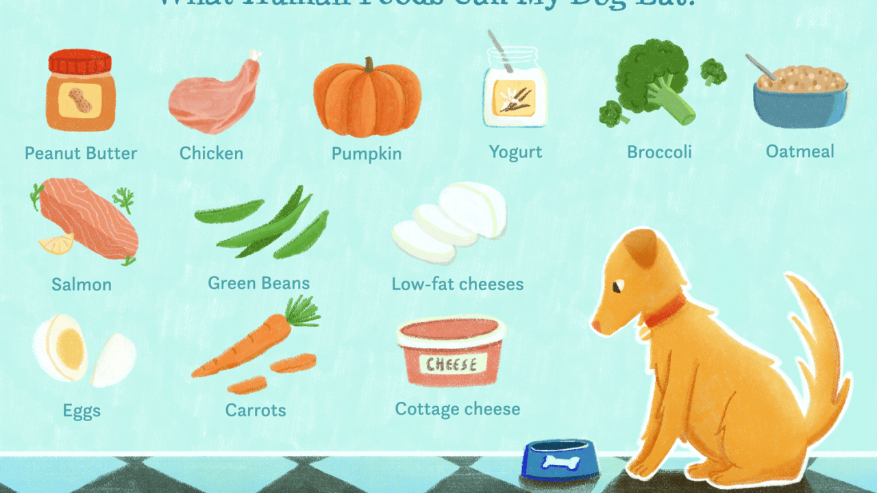 15 Human Foods Dogs Can Eat and 6 They Shouldn't