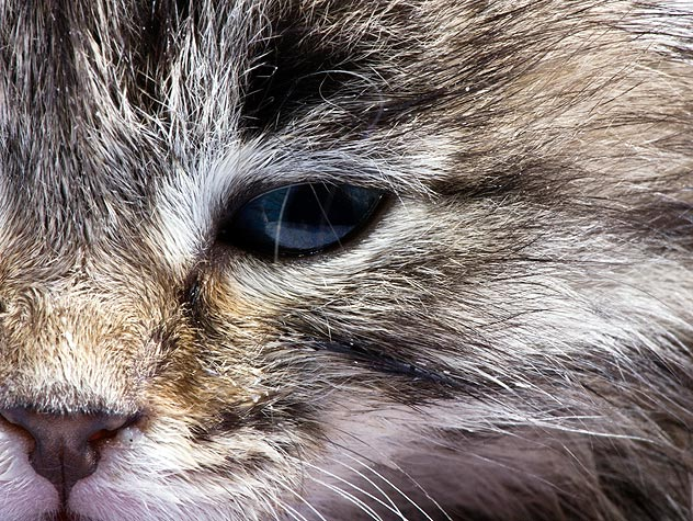 Treatments for Conjunctivitis in Cats | Petfinder