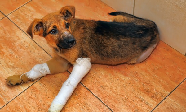 Reasons why your dog might limp after a walk | Smart Tips