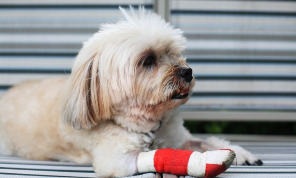 How to identify injuries and treat your dog's limping | Smart Tips