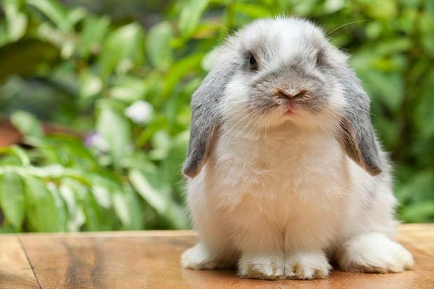 Your kids want a bunny? Here's all you need to know   Parent