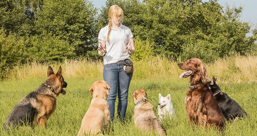 5 Essential Dog Commands   Learn Basic Dog Commands   Cesar's Way