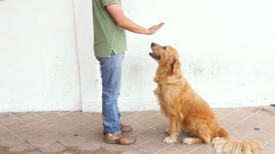 How to Train a Dog to Stay (with Pictures) - wikiHow Pet