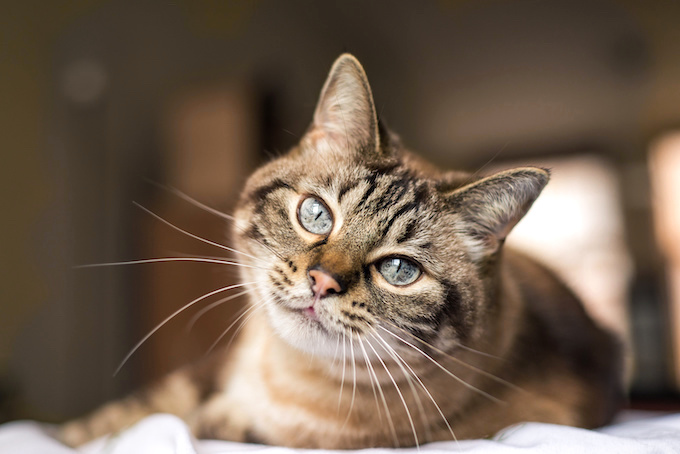 Cat Diarrhea: What You Need to Know   AnimalBiome