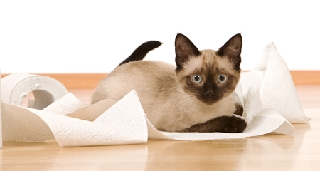 Most Common Causes of Diarrhea in Cats | PetCoach