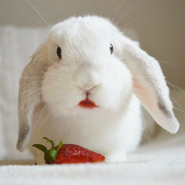 Can Rabbits Eat Strawberries? - Yes, but be careful! - Read more on rabbits .life