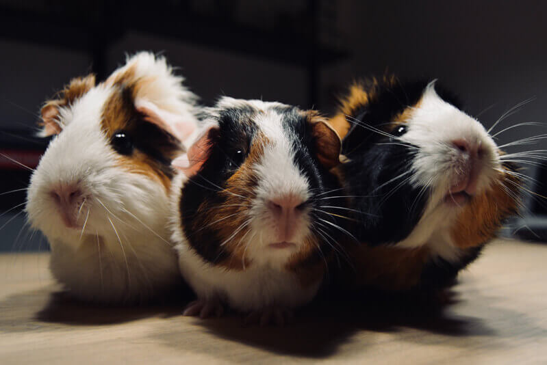 Small Pets - The Pet Logic