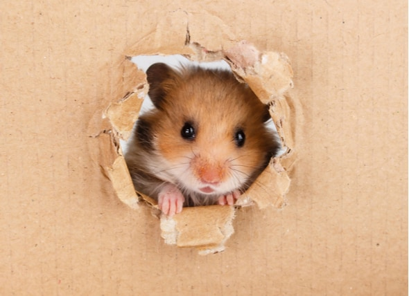 What Can Hamsters Eat? Carrots, Grapes, Tomatoes, and More