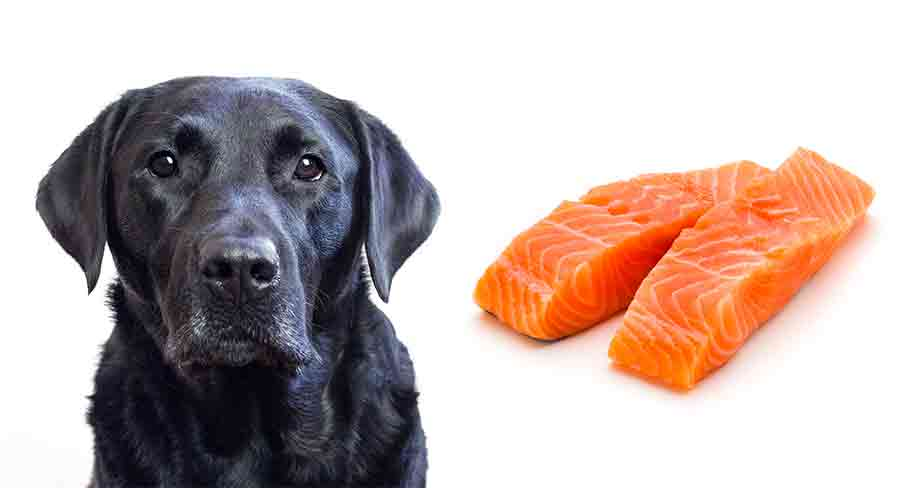 Can Dogs Eat Salmon? How To Safely Feed Salmon To Your Dog