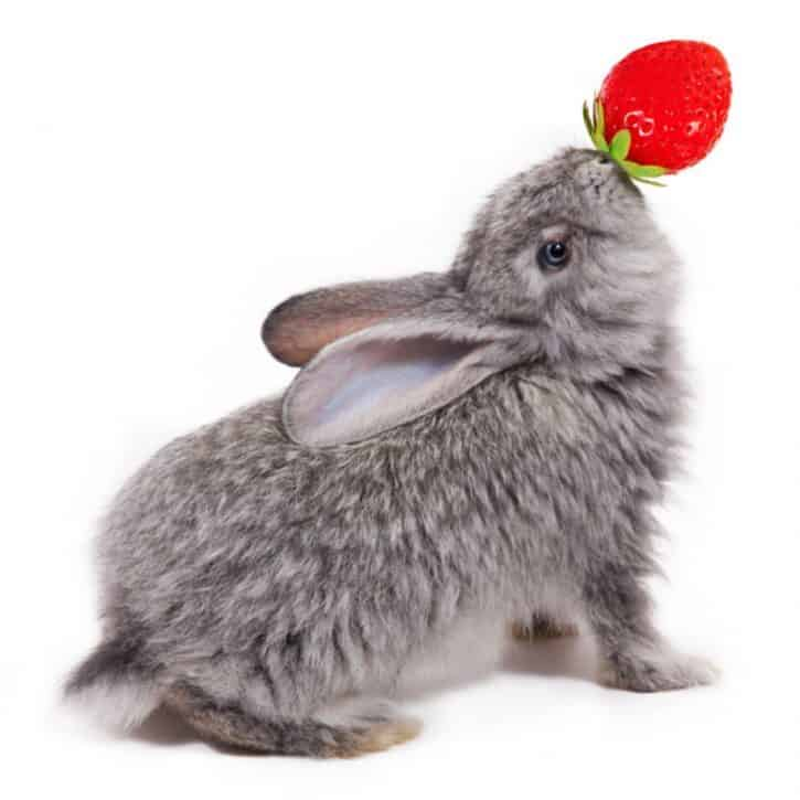 Can Rabbits Eat Strawberries? - Or are they berry dangerous for rabbits?